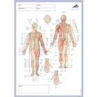 Meridian notepad, 1002440, Acupuncture