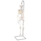Mini Human Skeleton Model Shorty on Hanging Stand, Half Natural Size - 3B Smart Anatomy, 1000040 [A18/1], Mini Skeleton Models