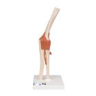 Deluxe Functional Elbow Joint Model,A83/1