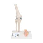 Mini Knee Joint with cross section,A85/1