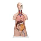 Classic Unisex Human Torso Model, 12 part - 3B Smart Anatomy, 1000186 [B09], Human Torso Models