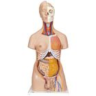 Deluxe Dual Sex Human Torso Model, 20 part - 3B Smart Anatomy, 1000197 [B32], Human Torso Models