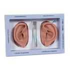 3B Ear set, one left and right ear, 1000373 [N15], Acupuncture Charts and Models