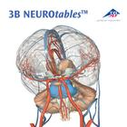 3B NEUROtables™ in French, 1002494 [S0290], Brain Models