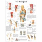 Knee Joint Chart,VR1174UU