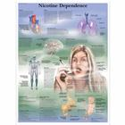Nicotine Dependence Chart, 4006728 [VR1793UU], Tobacco Education