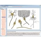 Nervous system and transmission of information Part I, Interactive CD-ROM, 1004280 [W13511], Biology Software