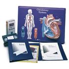Circulatory System Model Activity Set,W40206