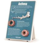 Asthma Easel Display, 1018278 [W43083], Asthma and Allergies Education